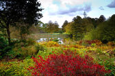 Rich and colourful flowers at autumn in an English garden — Foto Stock
