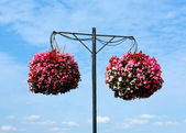 Two hanging baskets of bergonias with blue sky and white clouds — Stock Photo