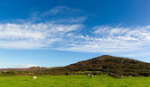 Cornish countryside Zennor near St Ives England UK with blue sky and clouds — Stock Photo