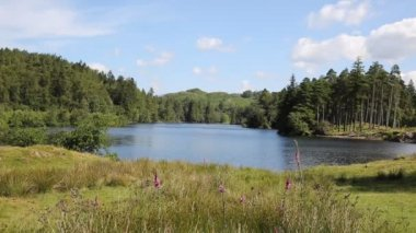 Tarn Hows Lake District National Park England uk between Coniston Water and Windermere on a beautiful sunny summer day — Stock Video