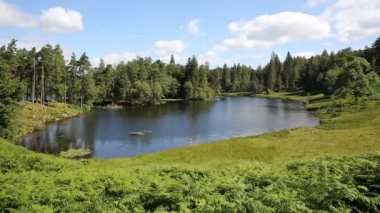 The most beautiful small lake in the Lakes Tarn Hows on a beautiful sunny summer day — Stock Video