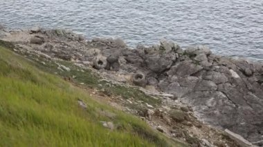 Fossil forest Lulworth Cove Dorset England — Stock Video