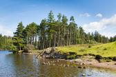 Tarn Hows Lake District National Park Cumbria England uk near Hawkshead — Foto de Stock