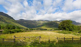 Mountains and daisies blue sky and clouds scenic Langdale Valley Lake District Cumbria near Old Dungeon Ghyll England UK in summer — Stock Photo