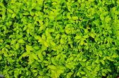 Green plant texture — Stock Photo