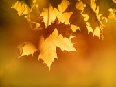 Orange autumn Leaves Background — Stockfoto