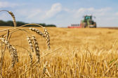 Last straws after harvest and tractor plowing the stubble field — Stock Photo