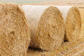 Bales of straw on stubble field — Stok fotoğraf
