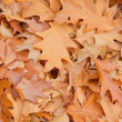 Oak leaves background — Stock Photo #35198763