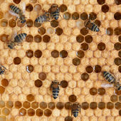 Honeycomb a včely — Stock fotografie