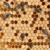 Honingraat en bijen — Stockfoto