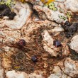 Magma rock with garnet crystals — Stock Photo