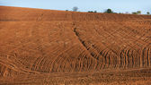 Cultivated land in Bulgaria — Stock Photo