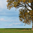 Stock Photo: Oak tree in fall