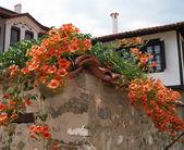 Flores nas ruas de zlatograd — Fotografia Stock