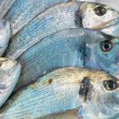 Sea-bream fish for sale on market — Stock Photo