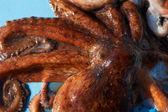 Fresh octopus — Stock Photo