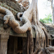 Stock Photo: TProhm Temple, Angkor, Cambodia