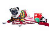 Cute Christmas dog — Stock Photo
