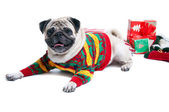 Cute Christmas dog — Stock Photo