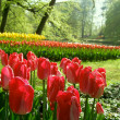 Garden with tulips — Stock Photo #40071895