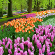 Beautiful spring park — Stock Photo #40071897