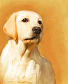 A yellow labrador oil portrait — Stock Photo