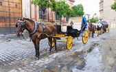 Two Horse carriage — Stock Photo