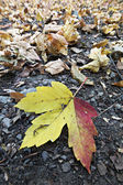 Blätter am boden in yedigoller — Stockfoto