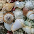 Stock Photo: Collection of seashells