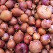 Macro view of fresh onions — Stock Photo