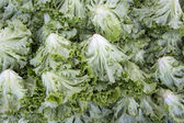 Macro view of fresh lettuces with crinkly leaves — Stock Photo