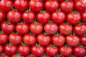 Tomatos in row as background — Stock Photo