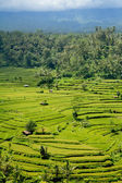Rice terrace in Bali, Indonesia — Stock Photo