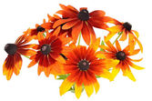 Bouquet of colorful rudbeckia flowers — Stock Photo