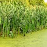 The swamp — Stock Photo #12658581