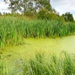 The swamp — Stock Photo