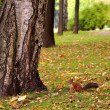 Squirrel in the autumn park — Stock Photo