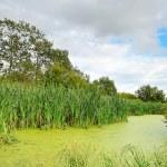 The swamp — Stock Photo #13271241