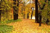 The autumn park — Stock Photo