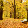 The autumn park - Stock Photo