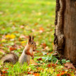 Squirrel sitting on the ground - Stock Photo