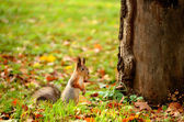Squirrel sitting on the ground — Stock Photo