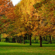 Colorful autumn trees - Stock Photo