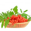 Red Branch of red rowanberries in plastic basket - Stock Photo