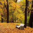 Stock Photo: Autumn landscape in park