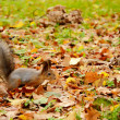 Squirrel in the autumn park - Stock Photo