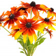 Bouquet of colorful rudbeckia flowers - Stock Photo