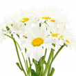Bouquet of chamomile flower — Stock Photo