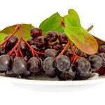 Black chokeberry (Aronia melanocarpa) — Stock Photo #22656059